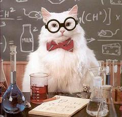 chemistry-cat.jpg